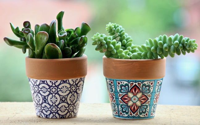 6 Plants That Make Great Gifts and What They Actually Mean